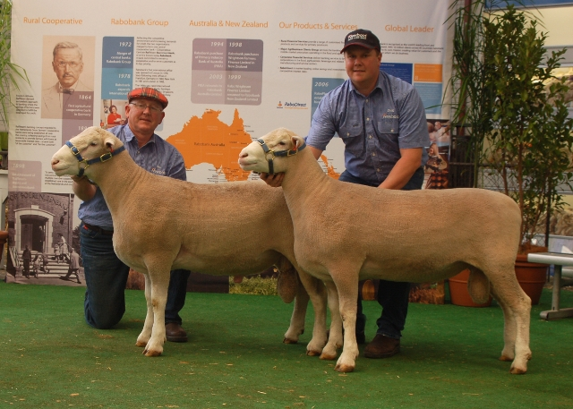 1st Poll Dorset Lamb Production Pair Export (also 2nd in interbreed competition)