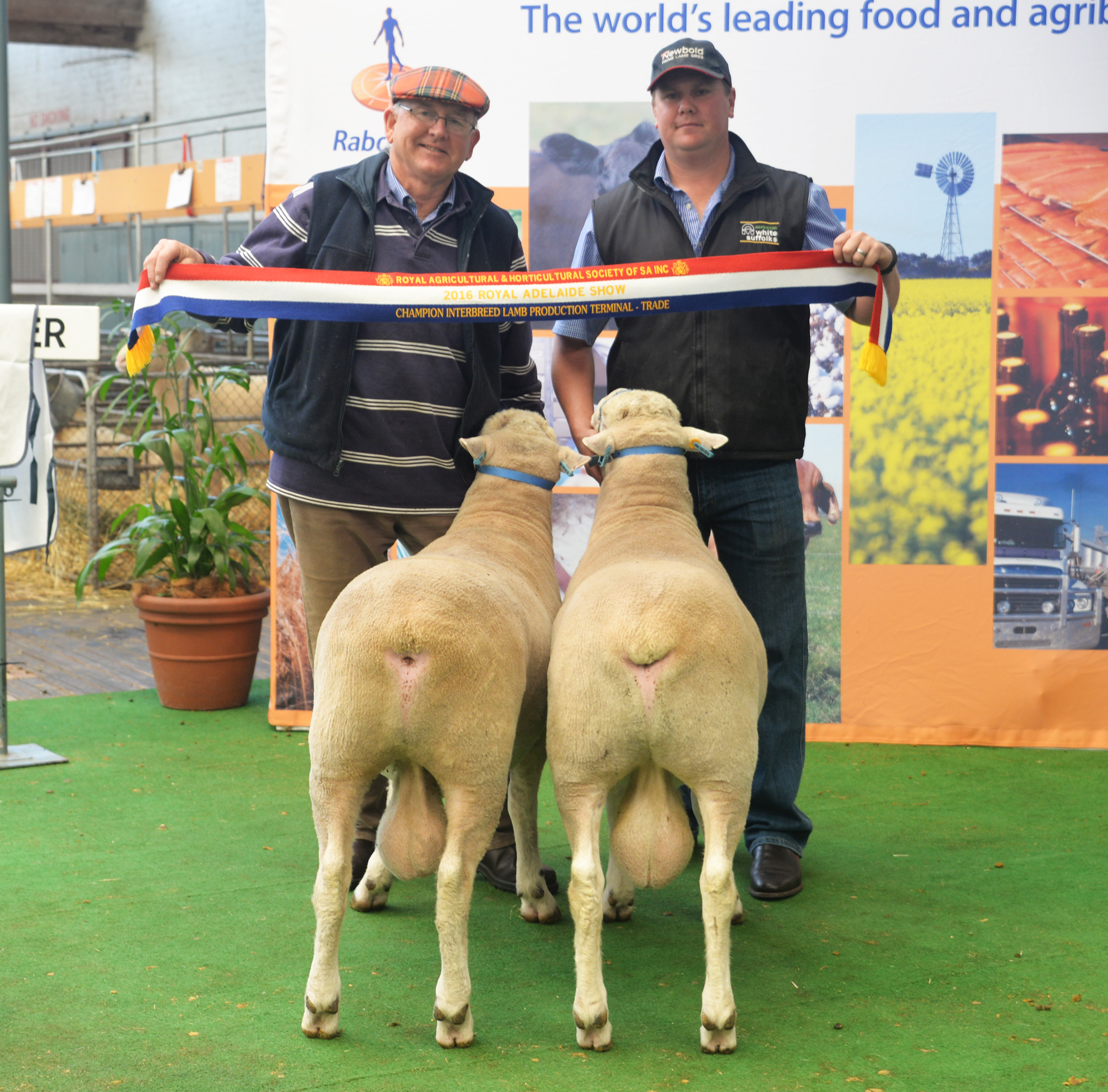 Newbold White Suffolks win Interbreed