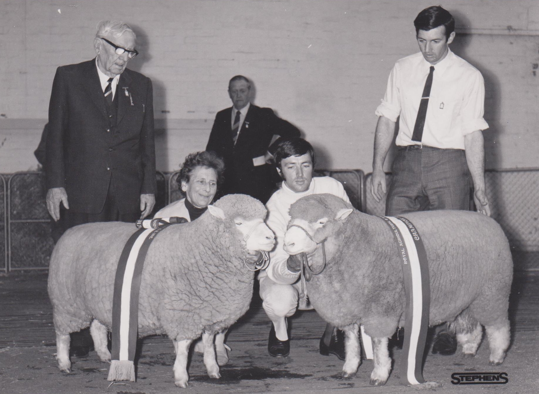 Australian Poll Dorset Association Founded – Flock No. 1