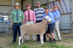 Pictured with the $3100 top priced Newbold White Suffolk ram are Peter Marschall, Landmark Gawler; Brett Peters, Elders Roseworthy; purchaser Luke Martin, Minlaton; and Craig McLachlan (holding ram) and Bill Close (holding grandson Hugo), Newbold, Gawler River.