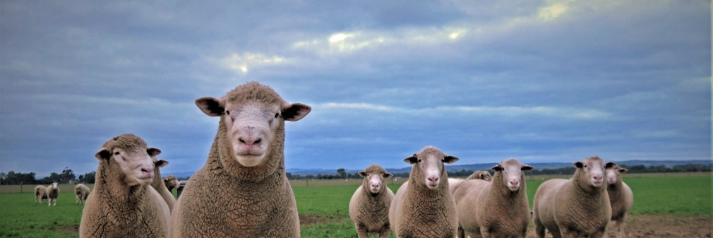 Newbold Prime Lamb Sires