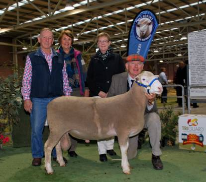 Newbold 65-12 sold to Coledale $9000
