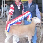 2015 Gawler Champion Ewe Newbold White Suffolk