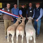 2015 Gawler Supreme Group Newbold Poll Dorsets
