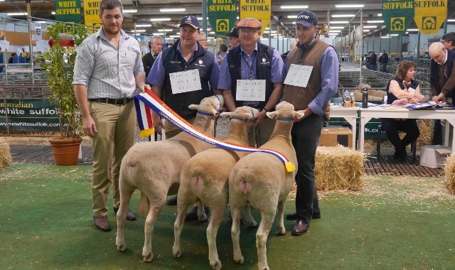2015 Adelaide Show Interbreed Maternal Group Newbold