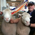 Winners are grinners! Rams from the Lamb Production Pair class